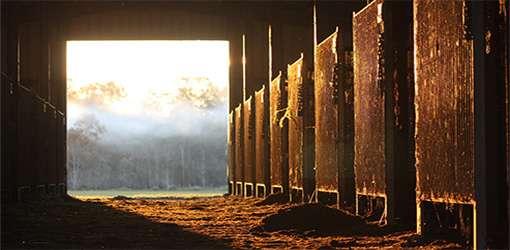 An empty horse barn