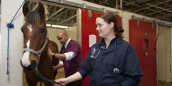 Veterinarian and assistance examing a horse.