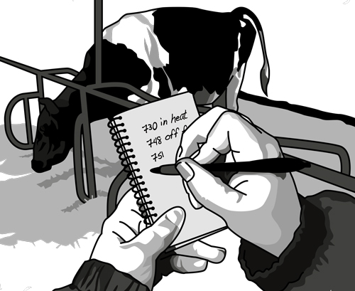 Image of a farmer observing a dairy cow