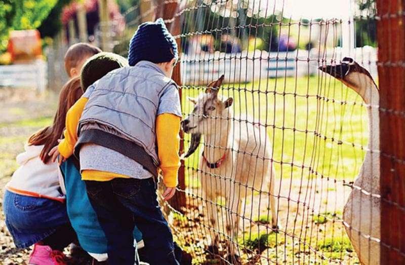 Children visiting a farm goat.